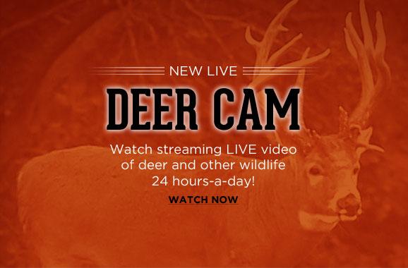 Live Deer Cam