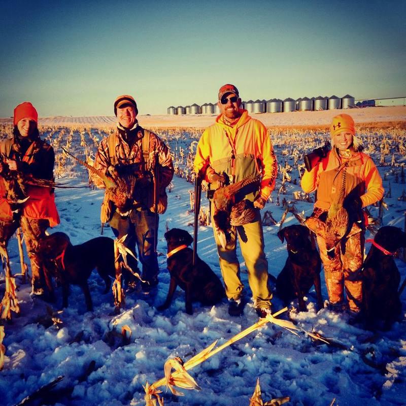 Free Range Pheasant Hunting