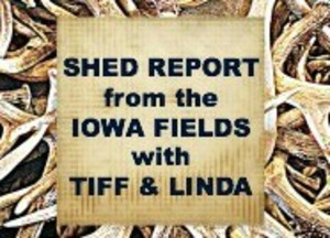 Shed Hunting Report from the Iowa Fields with Tiffany and her Mom, Linda